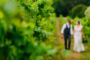 Bride and groom walking between vines at a winery wedding