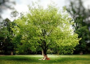 Bride and groom under big tree in Fitzroy Gardens