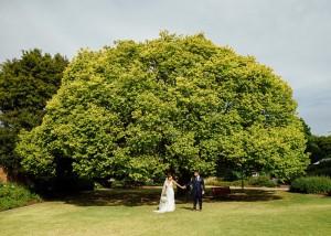 Huge tree with wedding couple under it